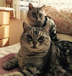 cat11-1