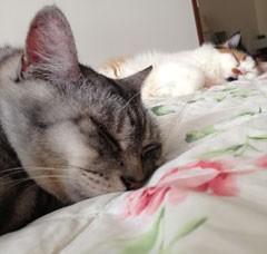 cat11-2